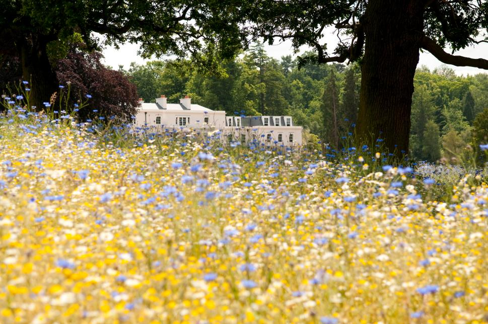 Meadow & Exterior back - Coworth Park (HIGH RES - LANDSCAPE)